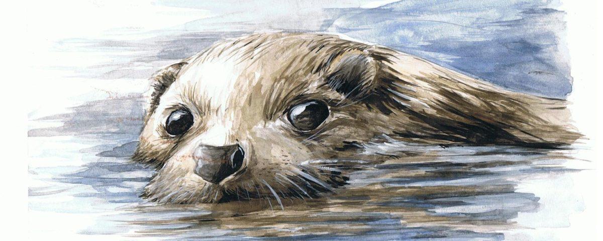 lontra pelo d'acqua